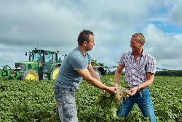 Controleren groei aardappelen voor juiste bemesting