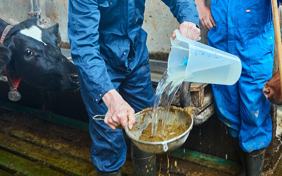 Controleren benutting ruwvoer enkrachtvoer met zeven van koeienmest